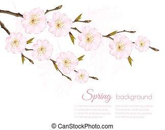 春, 背景, sakura, vector., branch.