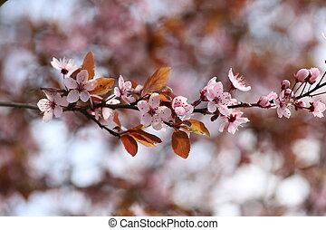 春, 花が咲く