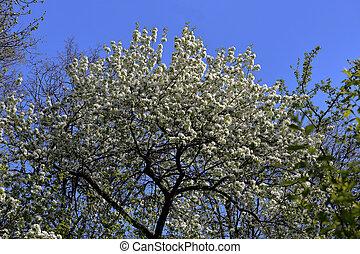 春, 花が咲く, sakura