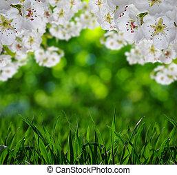 春, 花, ∥で∥, 柔らかい, ぼやけ, 背景