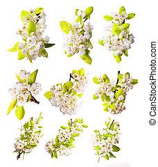 春, 花, 白, 背景