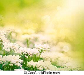 春, 花, 背景