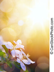 春, 花, 芸術, 背景, 空