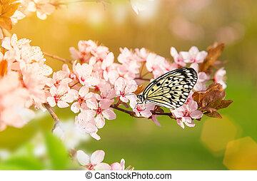 春, 花, butterfly.