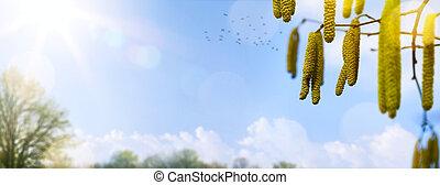 春, 花, tree;, 春の花, 上に, 青い空, background;