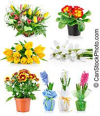 春, 葉, セット, 緑, 花