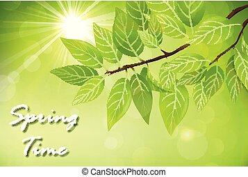 春, 葉, 緑の背景, 新たに
