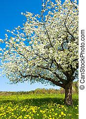 春, 開くこと, 木, 牧草地, 田園