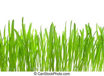 春, 隔離された, 背景, マクロ, 新たに, 白, 草