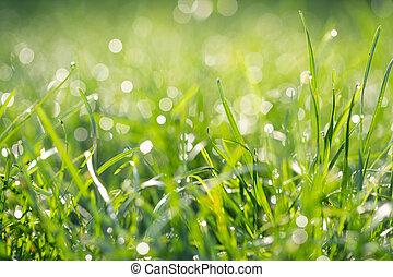 春, 露, 草, 新たに, 朝