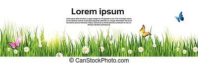 春, 風景, 緑の草, 花, 蝶, 土地, 旗