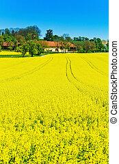 春, 黄色, 菜の花, フィールド