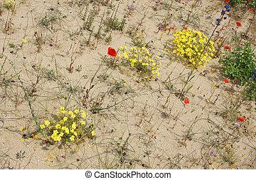 春, 2, 砂漠