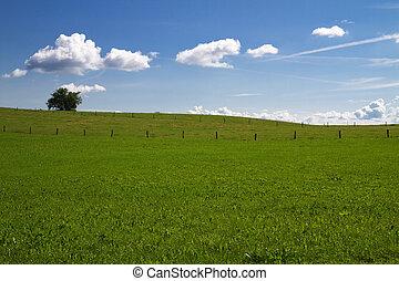 春, bavaria, 牧草地