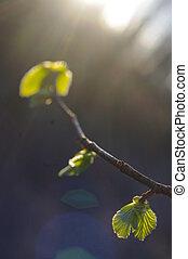 春, bud., 構成, の, nature.