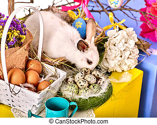 春, flowers., うさぎ, egg., 休日, イースターうさぎ