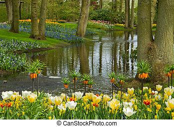 春, keukenhof, 庭, netherlands