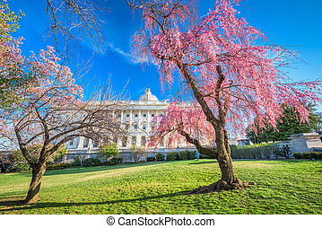 春, washington d.c.