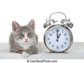 時計, 子ネコ, 節約, 日光
