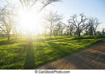 時間, 公園, 春