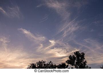 晚上, 天空, 樹