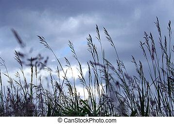 晚上, 草