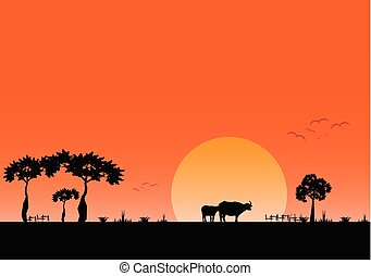 晚上, 領域, 日落, 背景, 風景, 看法