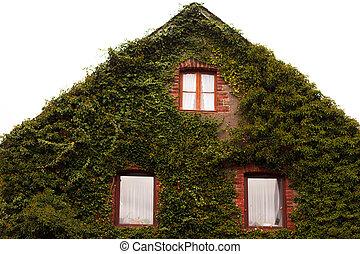 普通, 常春藤, 覆盖, 山墙, 墙壁