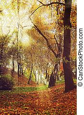 景色, 光線, 絵のよう, light., 秋の森林, 柔らかい