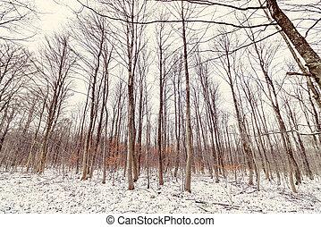 景色, 冬季, 森林
