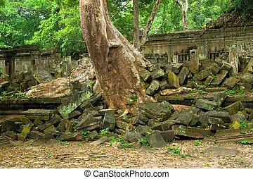 景色, 台なし, ジャングル, 寺院