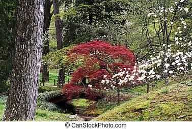 景色, 概観, 庭, 日本語