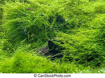 景色, 水中に沈められる, 緑, 淡水