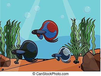 景色, 水中, fish, 戦い