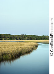 景色。, 沼地, 沿岸である