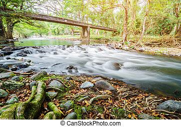 景色。, 流れ, 滝, 緑の森林, 川