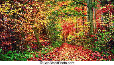 景色, 秋の森林, カラフルである