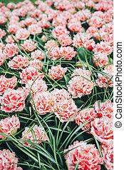 景色。, 花, park., カラフルである, 春