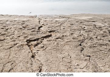 暖まること, 海岸線, 世界的である, 災害