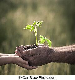 暗い, に対して, 植物, 若い, 背景