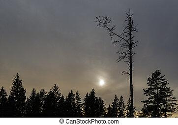 暗い, ツリーの森林, 思わぬ障害