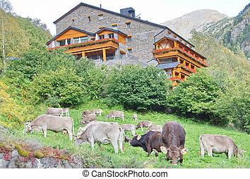 暗い, 家, アンドラ, 牛, れんが, 牧草, 典型的