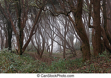 暗い, 森林