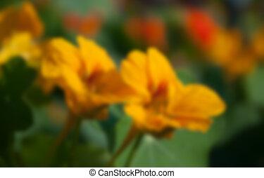 暗い, 花, 背景, 黄色, 咲く