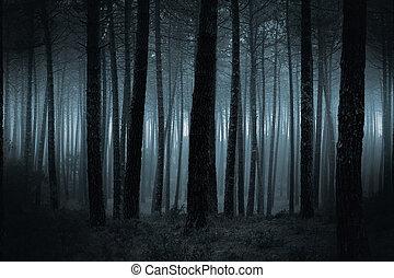 暗い, 霧が濃い, 森林