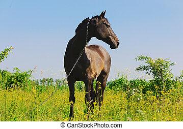 暗い, 馬