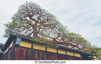 ∥, 最も大きい, 盆栽, 中に, 日本
