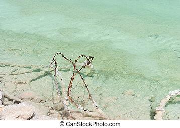 有刺鉄線, 中に, ∥, 浅い, 水, 死海