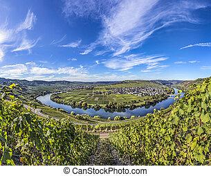 有名, trittenheim, 川, ループ, モーゼル