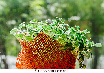有机, 綠色, 年輕, 向日葵, 新芽, 在, 大袋, 在, nuture, 背景
